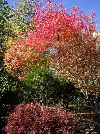 Adelaide Hills Bed and Breakfast Accommodation: Autumn colours in the garden