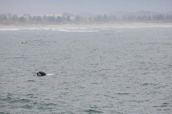 Quinta do Bucanero Hotel de Charme: Baleias