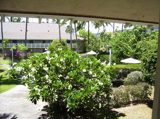 Plantation Hale Suites: from a common balcony showing garden/pool area