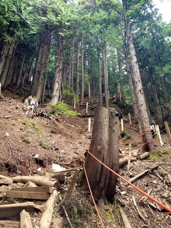 The Grouse Grind: The trail
