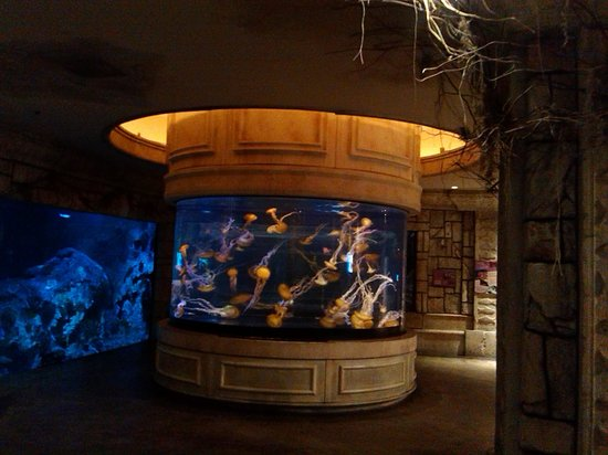 Ray touch tank picture of shark reef las vegas for Fish tank las vegas