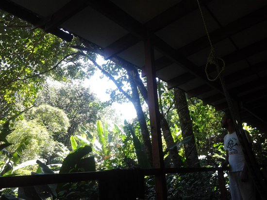 El Tucan Jungle Lodge: tjl