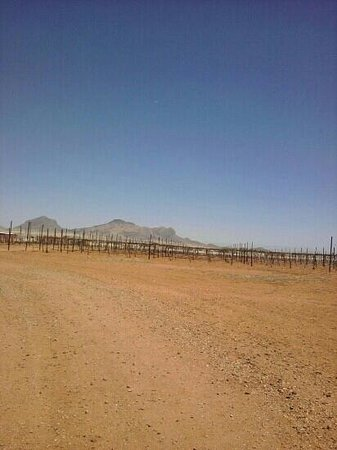 Sonoita Vineyards: Yes! Believe it vineyards in the desert