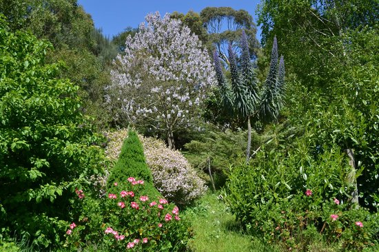 Trafalgar South, Austrália: Flowering garden