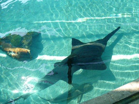 Aquarium Picture Of Aquarium Of The Pacific Long Beach