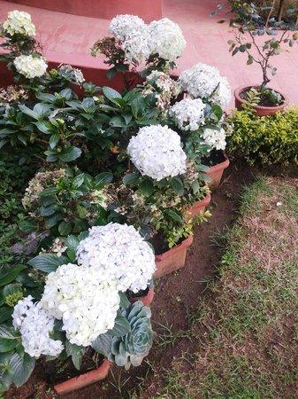 Kluney Manor: Flowers in the garden..