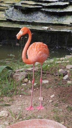 IFA Villas Bavaro Resort & Spa: Flamingo im Hotelgelände