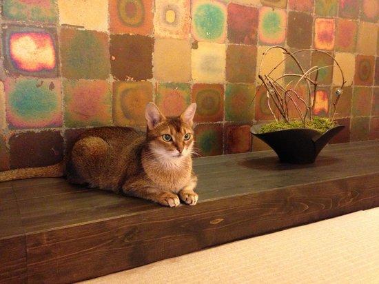 Auberge Meson: お部屋の床の間に鎮座する、うちのネコ