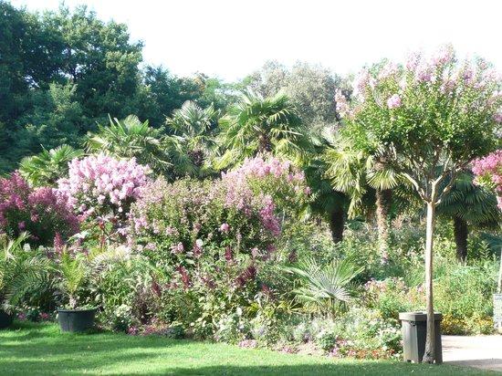 Parc Floral et Tropical de la Court d'Aron: l'allée des Lilas d'Inde
