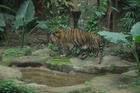 Bali Zoo - Picture of Bali Zoo, Sukawati - TripAdvisor