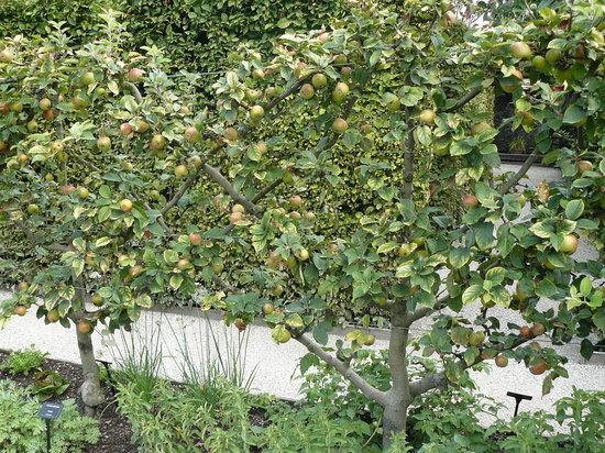 Jardin des Cinq Sens : Apple Trees