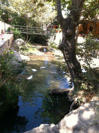 Water Mills Milopotamos : laghetto nel centro del paese di mylopotamos