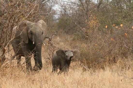 nThambo Tree Camp: Baby elephant