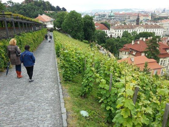 Conocer Praga Tours privados y Excursiones: Bajando del castillo entre viñas