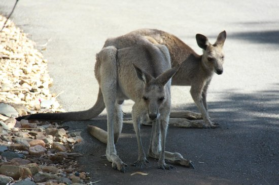 Capricorn Caves: The wildlife is very friendly