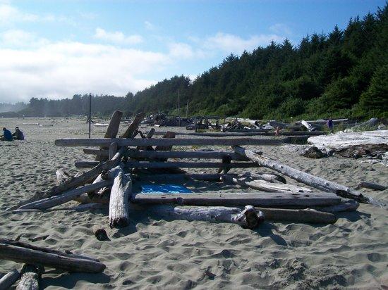 Long Beach: Driftwood Windbreaks!