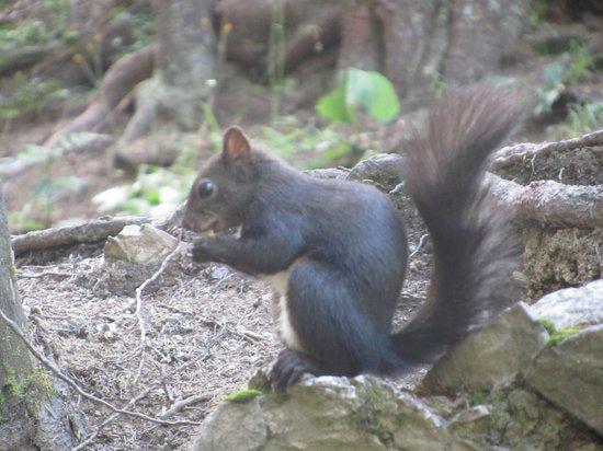 Posthotel Holiday Villa Arosa: Feeding the squirrels
