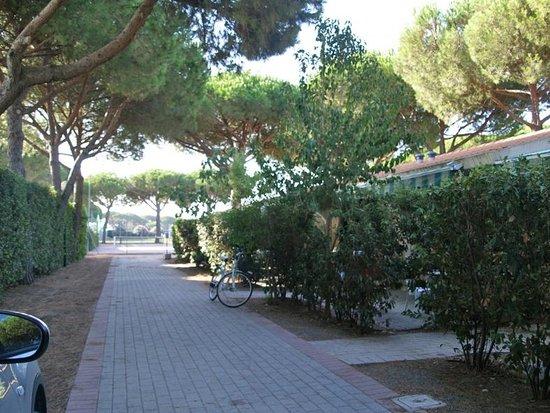 Camping Village Voltoncino : vialetto davanti bungalow