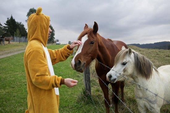 Mystwood: friendly horses
