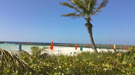 Castaway Cay: everything's better with palm trees!