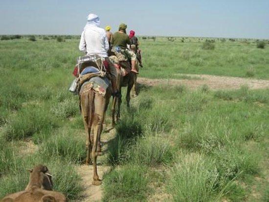 Hotel Neem Haveli: riding camel