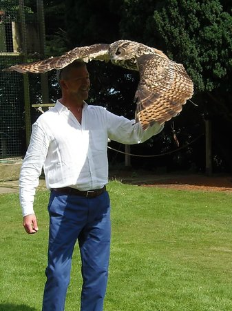 Swinton Park Birds of Prey: An Owl umbrella