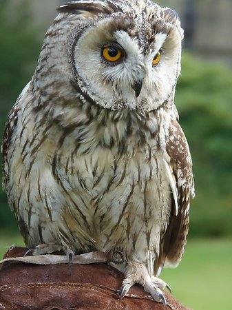 Swinton Park Birds of Prey: Small yet perfectly formed