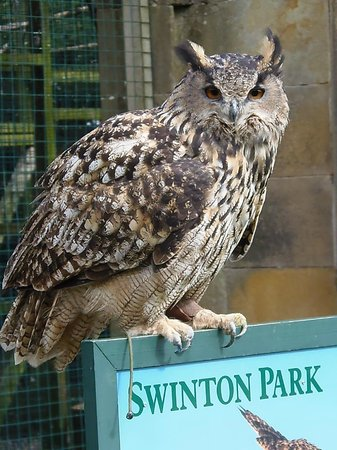 Swinton Park Birds of Prey: Doing her stuff