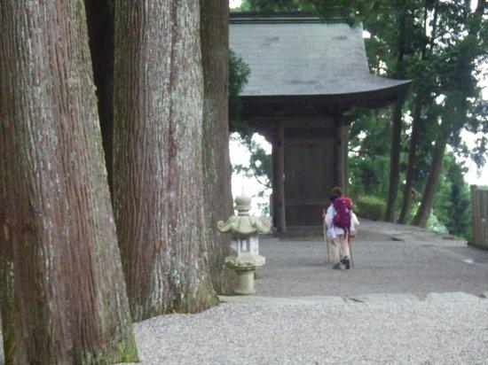 Shikokuhenro : 焼山寺の大杉。神聖な空間。