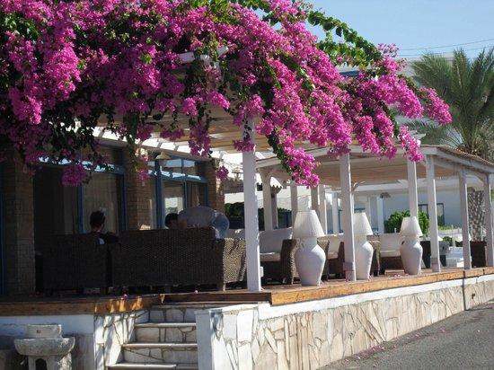 Tasmaria Hotel Apts.: Pool bar