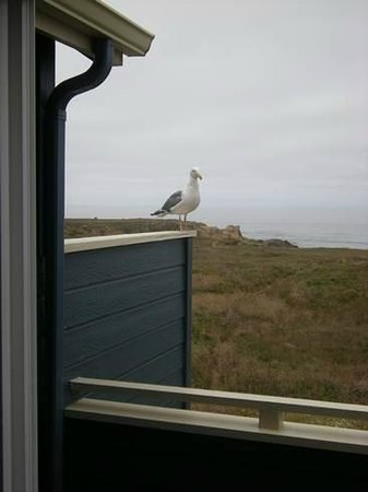 Surf & Sand Lodge: view of the sea and gull