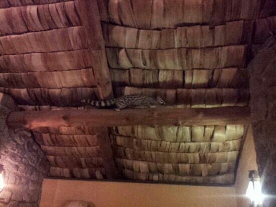 Ndutu Safari Lodge : genet cat