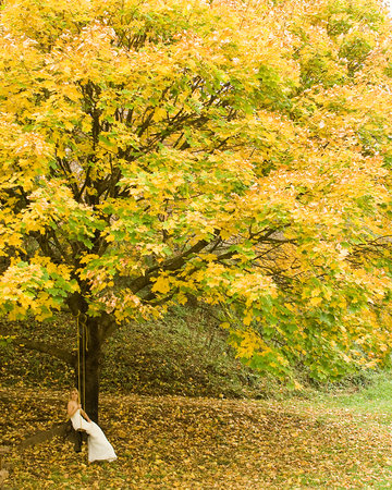 Twin Maples Farmhouse: This beautiful maple tree is on the lower property