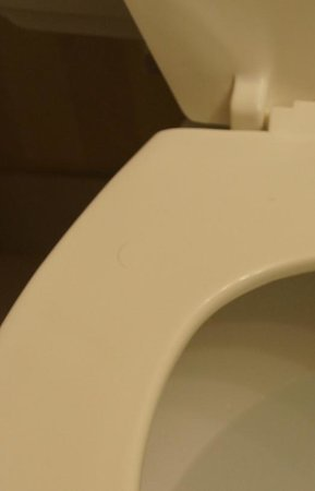 Executive Airport Plaza Hotel & Conference Centre Richmond: Pubic hair on toilet seat