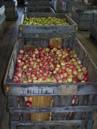 Apples inside store at Johnson's Orchards