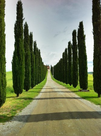 Province de Florence, Italie : Private road in Chianti
