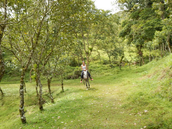 Arenal Canopy Adventure (ATHICA Canopy Tour): Beautiful way to see the countryside--on horseback Athica Canopy