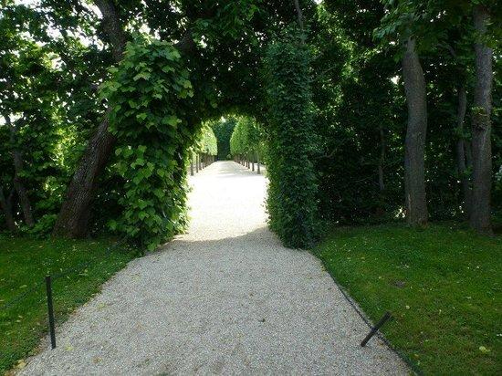 Gärten von Schönbrunn: The lovely garden.