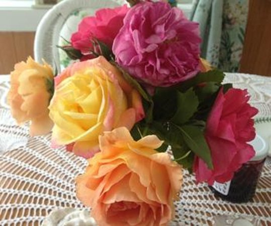 The Dungeness Barn House Bed and Breakfast: Gorgeous roses from their garden