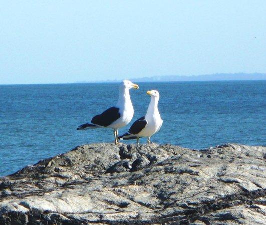 Dunas del Este: Fauna de Punta Colorada