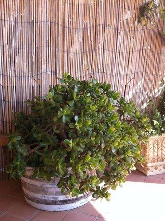 The Lemon Tree: Cactus magnifique sur la terrasse