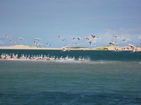 Vila Do Paraiso: Flamingos on sand bar - Bazaruto Isalnds