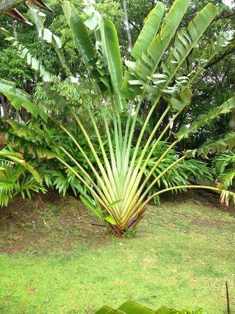 Foliage around Property