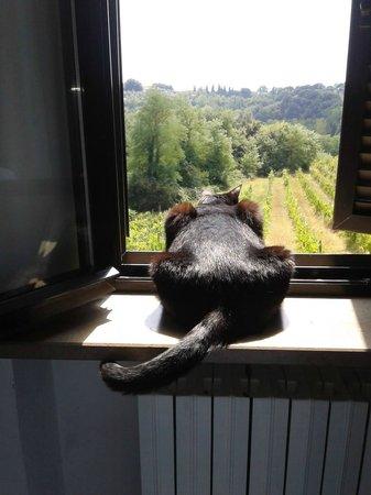 Villa Agostoli: ospitali anche con la nostra gatta