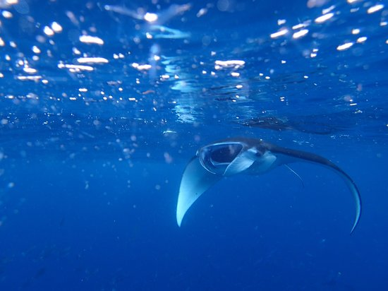 The Point Resort Lembongan : Yes ! you can see Manta Rays there ! Amazing