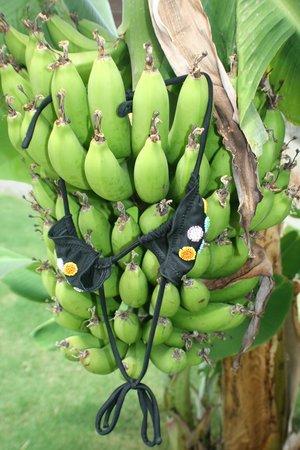Paradise Island Villas: bananen in je eigen tuin