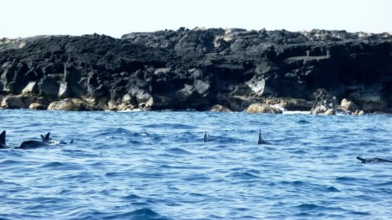 Adventures in Paradise Kayak & Snorkel: Surrounded by Spinner Dolphins