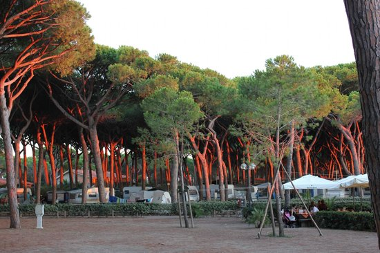 Argentario Camping Village: from bungalow 202
