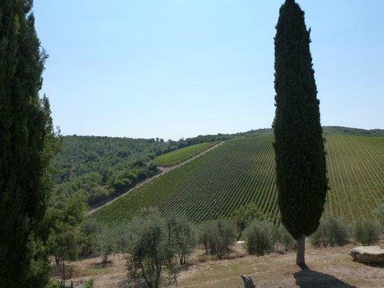 Querceto di Castellina : Views outside the cooking area