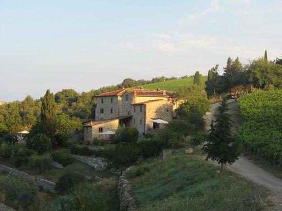 Vineyard Collelungo
